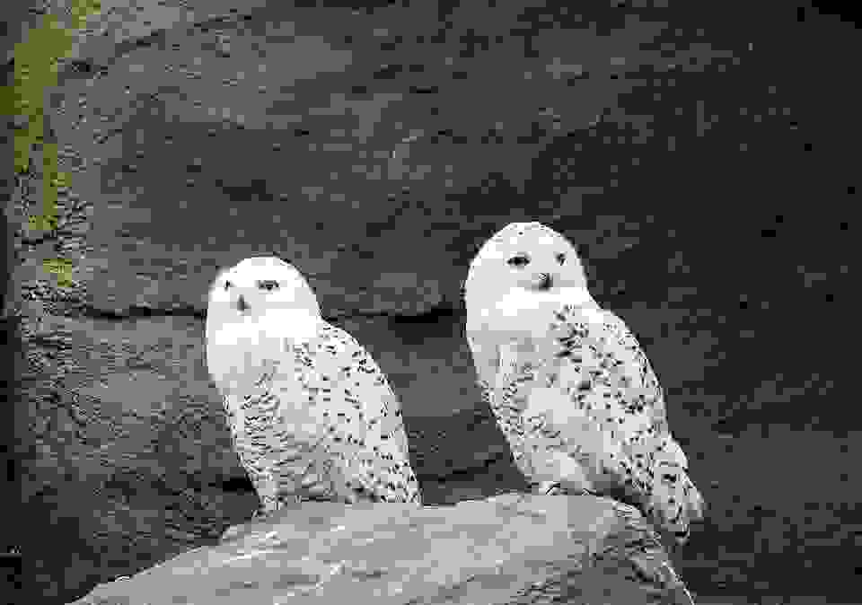 Vicarious Liability and a phobia of owls – Brayshaw v The Partners of Apsley Surgery & O'Brien
